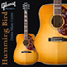 Gibson 5-Star Dealer - Dexter Music Center - Hummingbird